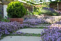 Step by step -  Thyme pathway