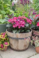Hydrangea 'Dark Angel' in wooden barrel container
