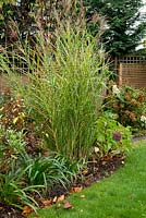 Autumn border with Miscanthus sinsensis 'Zebrinus', Hydrangea paniculata and Agapanthus 'Praecox Blue'
