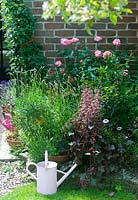 Pink garden border summer with watering can