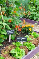 Raised beds in a small garden planted with lettuces. With mini blackboard labels