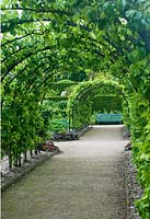 Pear pergola in early summer - West Dean