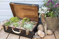 Step by Step - Recycled tool chest used as succulent container.