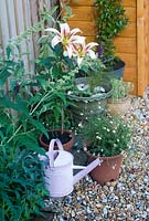 Summer pots on patio with lilies