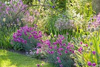 Summer border with Dianthus plumarius 'Laced Monarch'