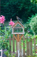 Young blackbird on birdtable in summer