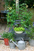 Summer containers on patio