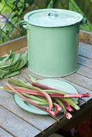 Picked rhubarb stems on vintage enamel plate