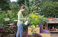 Woman watering plants in small suburban garden