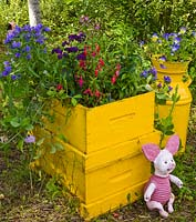 Bright yellow planter with Fuchsia and Viola and childs toy
