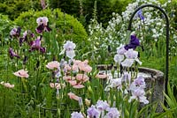 Iris germanica and Papaver 'Karine' in mixed border
