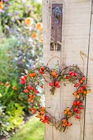 A woven heart with Rose hips, hanging on rustic wooden door