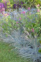 Festuca glauca 'Uchte', Cynoglossum amabile and Salvia microphylla 'Cerro Potosi' in Summer border