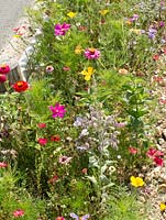 Mixed decorative flowers, sown in roadside verge, amenity horticulture, Central France