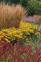Barn House, Brockweir Common, Gloucestershire. September. Garden opens for NGS. The Grasses Terrace. Persicaria amplexicaulis 'Firetail'. Calamagrostis x acutiflora 'Karl Foerster', Rudbeckia fulgidia var. deamii. Persicaria amplexicaulis 'Rosea'