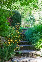 Steps to yard  -  Crocosmia Coleton Fishacre - formerly 'Gerbe D'Or, Hakonechloa macra and H.'Aureola'