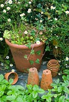 Old terracotta pots with erigeron karvinskianus