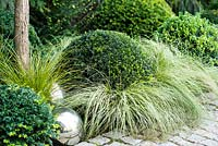 Clipped evergreen  Buxus topiary amongst Carex 'Frosted Curls'  with silver ball beside granite stone path.