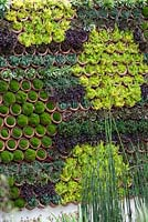 Vertical living wall - planted with succulents - RHS Chelsea Flower Show 2013