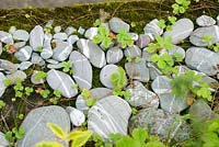 Arrangement of beach pebbles on mossy wall with alpine strawberry plants