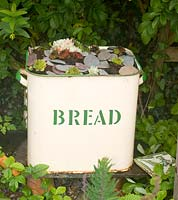 Vintage enamel bread bin planted with houseleeks
