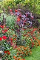Mixed hot summer border with Physocarpus, Miscanthus, Canna and Ricinus, Dahlia 'Bishop of Landlaff', Canna indica 'Schwabenstolz', Physocarpus opulifolius 'Diabolo', Ricinus communis 'Carmencita Red', Zinnia 'Double F1 Fire', Zinnia 'Profusion F1 Fire', Zinnia elegans 'Scarlet Flame'