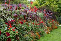 Red hot summer border. Large leaved Canna and Ricinus alternate with the linear Miscanthus - other plants are Dahlia 'Barbarossa', Dahlia'Honka Red', Dahlia 'Spartacus' , Beta vulgaris 'Vulkan', Miscanthus sinensis, Pennisetum villosum, Physocarpus opulifolius 'Diabolo', Ricinus communis 'Carmencita Red', Zinnia 'Profusion F1 Fire', Zinnia angustifolia 'Profusion Fire', Zinnia elegans 'Oklahoma Scharlach', Zinnia elegans 'Scarlet Flame'