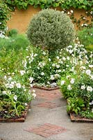 White garden with concrete path inset with brick patterning and white Rosa Flower Carpet White = 'Noaschnee', PBR, AGM around topiarised variegated shrub in the centre