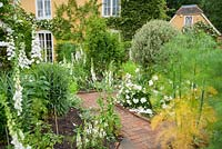 White garden with concrete path inset with brick patterning and white Rosa Flower Carpet White = 'Noaschnee' around topiarised variegated shrub in the centre, surrounded by foxgloves, delphiniums and fennel.
