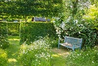 Garden seat in corner of wild garden with ox eye daisies, Rosa 'Seagull' and hawthorn hedge