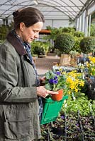 Woman browsing selection of spring flowering bulbs at a garden centre. Narcissus.