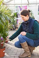 Woman browsing selection of indoor plants at a garden centre