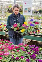 Woman selecting mixture of Primula and Polyanthus at a garden nursery