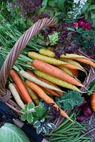 Organic vegetables in wicker basket. Carrots, pumpkin, apples, red onion, cabbage, green beans, lettuce and tagetes, thyme, mint, sage and parsley in vegetable patch