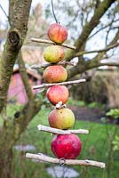 Apple Bird Feeder hanging from tree