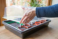 Placing freshly planted seeds in heated propagator