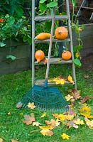Squash potimarron on vintage wooden steps with autumn leaves and rake
