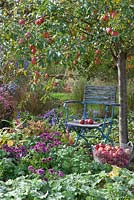 Apple tree with chair