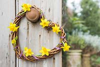 Woven daffodil wreath hanging on door. Narcissus 'Tete a tete'