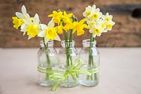 Floral arrangement of Narcissus in small glass jars