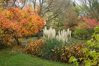 Garden in autumn with Cortaderia selloana 'Pumila' and Cotinus  'Flame'