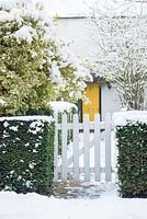 White picket gate in yew hedge. Cottage with yellow front door. Euonymus fortunei 'Silver Queen'.