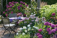 Hydrangeas - Table and chairs on terrace