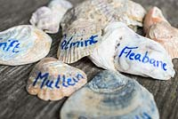 Plant labels Mark II. Using seashells as labels for coastal themed plants.