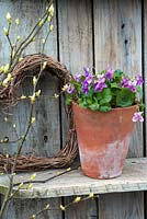 Viola odorata 'Miracle Pink' displayed in pot with willow heart