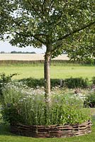 Apple tree underplanted with perennials. Woven willow edging. De Carishof.