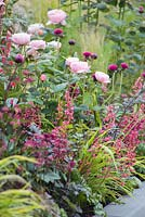 GAP. Planting combination of Rosa 'Queen of Sweden', Heuchera, Hakonechloa macra and Cirsium. Positively Stoke-on-Trent.
