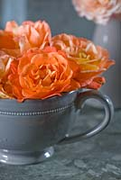 Grey cup with Rosa 'Westerland'. Les Jardins de Roquelin, Loire Valley, France