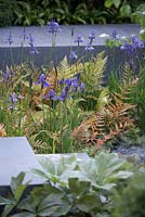 Rodgersia podophylla, iris and ferns. RHS Chelsea flower show 2014 - The Brewin Dolphin Garden, awarded silver gilt