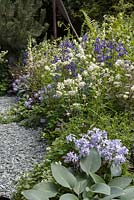 The Viking Cruises Norse Garden.  Mixed planting with Aqualegia 'Green Apples', Anchusa 'Loddon Royalist', stocks and Digitalis 'Dalmation Cream'